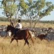 Farm work in the Outback in Australia