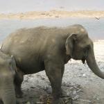Animal welfare thailand