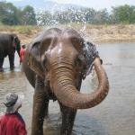Animal conservation Thailand