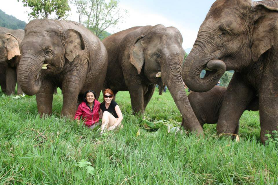 Elephant protection in Thailand