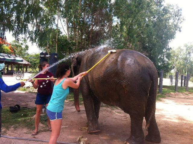 Elephant volunteering
