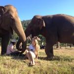 Elephant volunteering