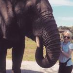Elephant convervation
