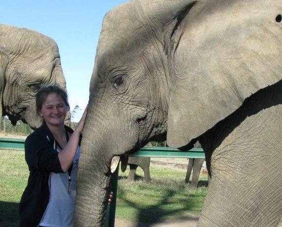 Elephant volunteering in South