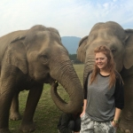 Elephant volunteering in Thailand