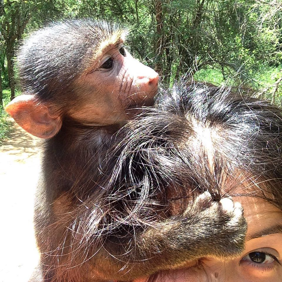 monkey hairstylist