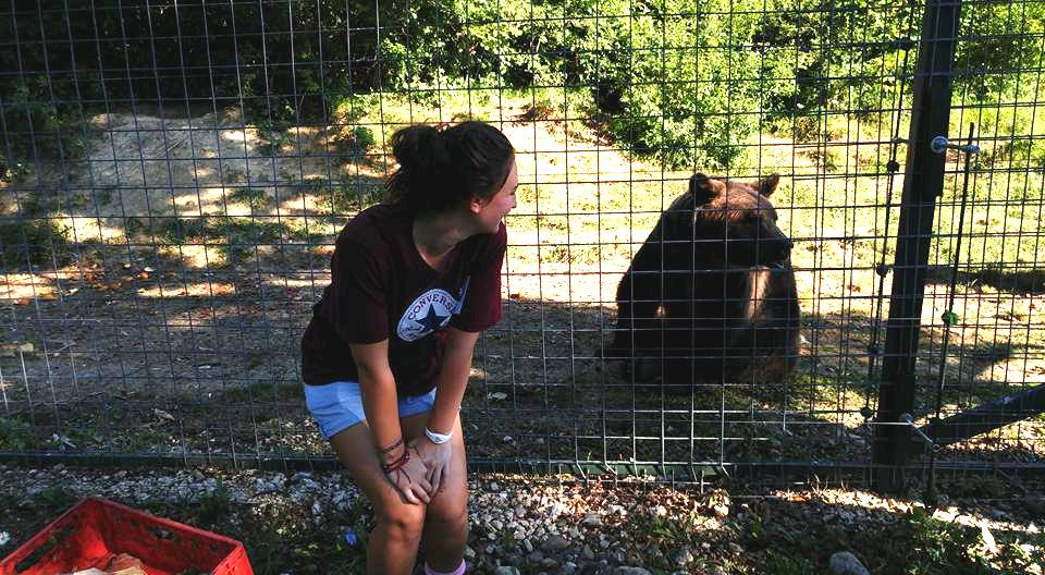 Volunteering with bears