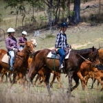 Backpackers working cattle from horseback