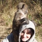 Monkey rehabilitation