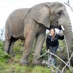 Oyster volunteer with elephant Sally