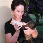 Oyster volunteer feeding a baby baboon