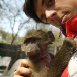 Oyster reviews: volunteer with monkeys in South Africa