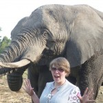 Oyster volunteer with elephants