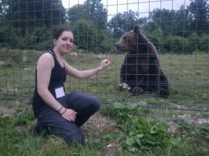 Bear volunteer in Romania