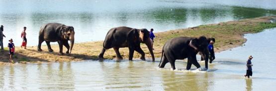 Volunteer with elephants in Thailand