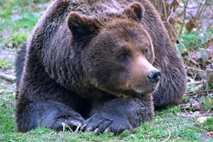 Adopt a bear