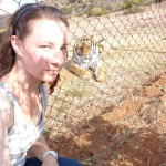 Volunteer with tigers