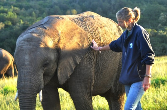 Work with elephants on your volunteering holiday