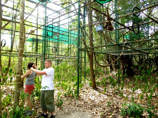 Become a wildlife volunteer in Thailand