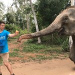 A volunteer takes an elephant for a walk