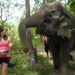 Oyster Reviews: volunteering with wildlife in Thailand