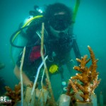 Oyster Reviews: Marine conservation and diving in Thailand