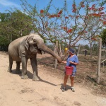 A volunteer in Thailand looks after a rescued elephant