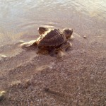 Oyster reviews: volunteering with turtles in Costa Rica