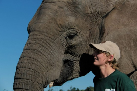Elephant volunteering in South Africa