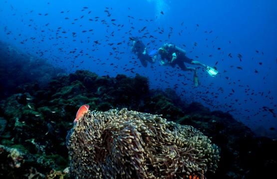 Marine conservation internship in Thailand