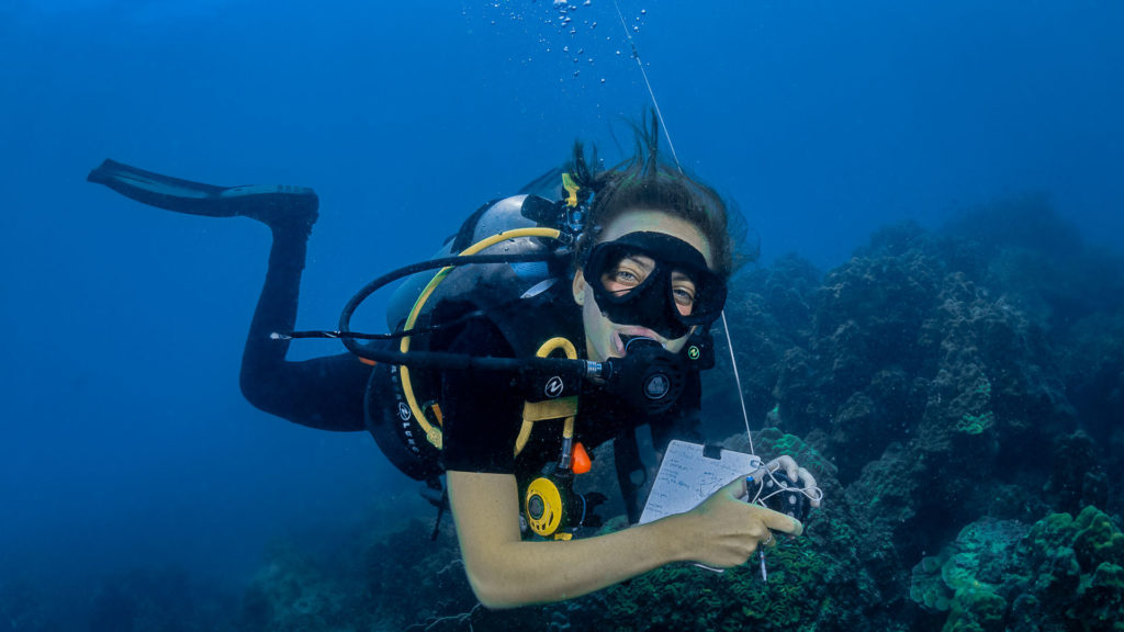A diver makes notes underwater whilst observing the coral