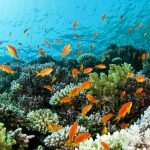 Beautiful coral reef in Thailand with brightly coloured fish