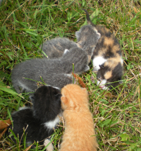 Kittens rescued in Romania