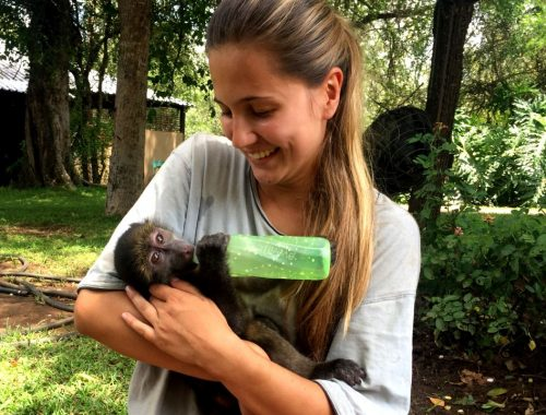 Volunteer with monkeys in South Africa: stay for 12 weeks and pay for 8