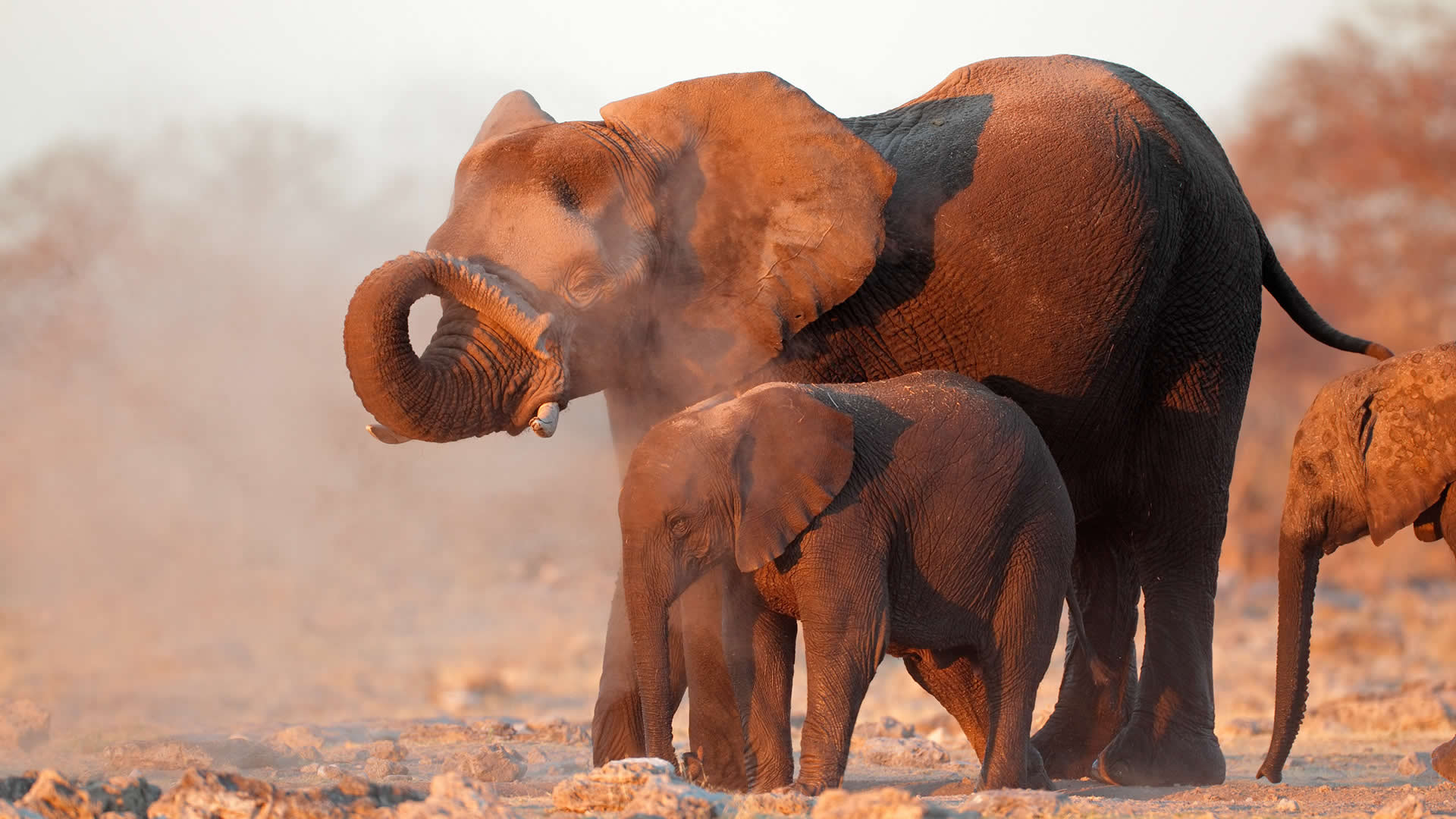 An elephant and her baby in Namibia