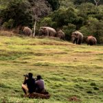 Volunteers watch as elephants graze in the wild in Sri Lanka