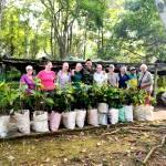 Volunteers help with growing saplings