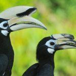 Wildlife in Borneo