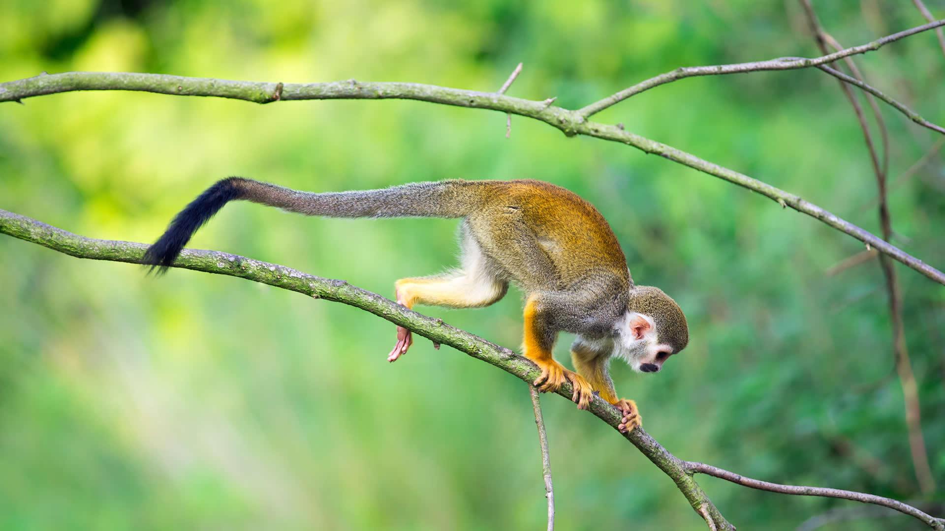 Volunteer With Monkeys In Ecuador At An Inspiring Rescue Centre