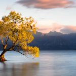 A tree in a lake in New Zealand