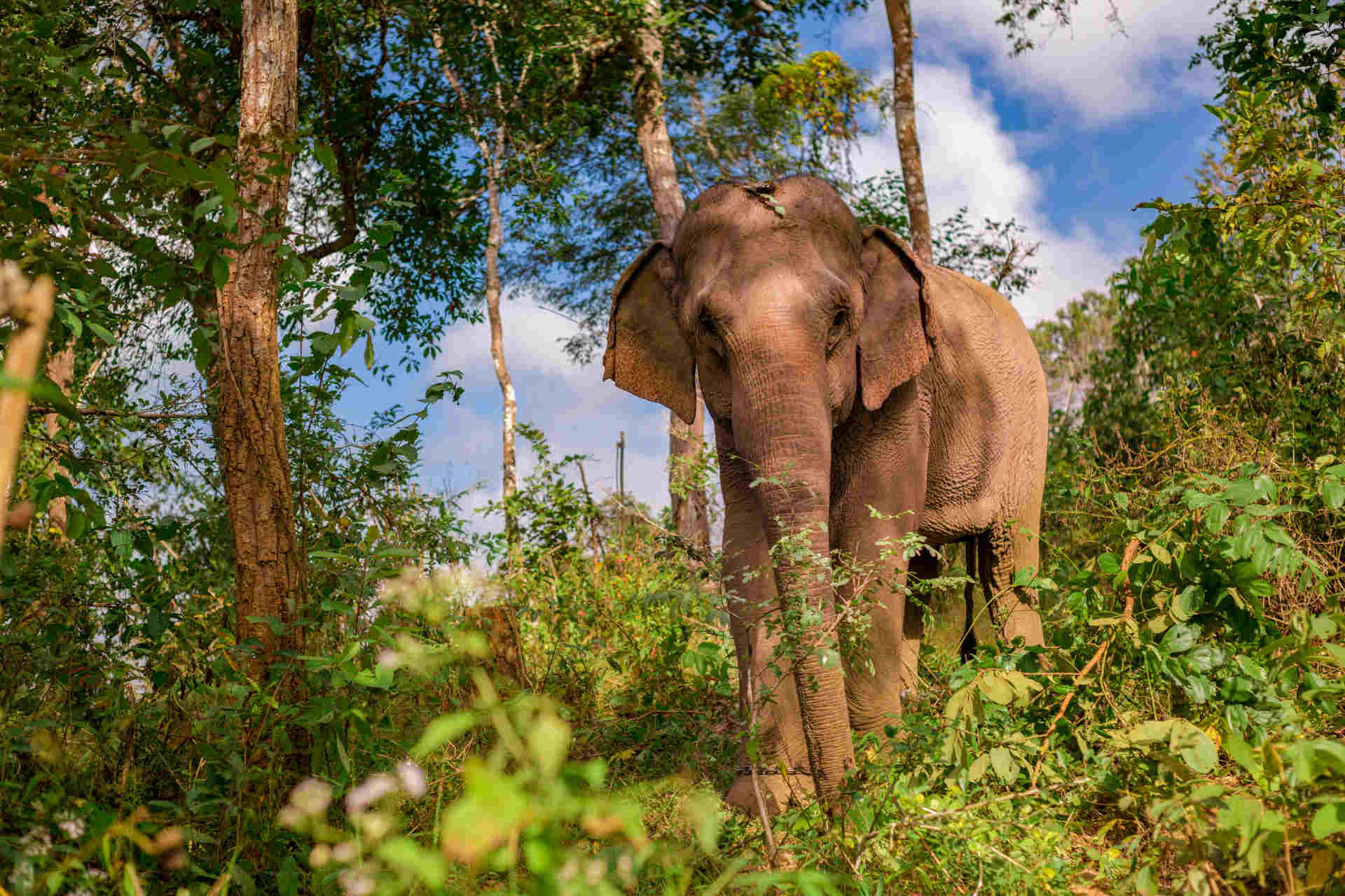 An elephant gazes out over the rescue centre