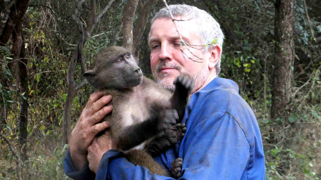 A volunteer helps to rehabilitate primates
