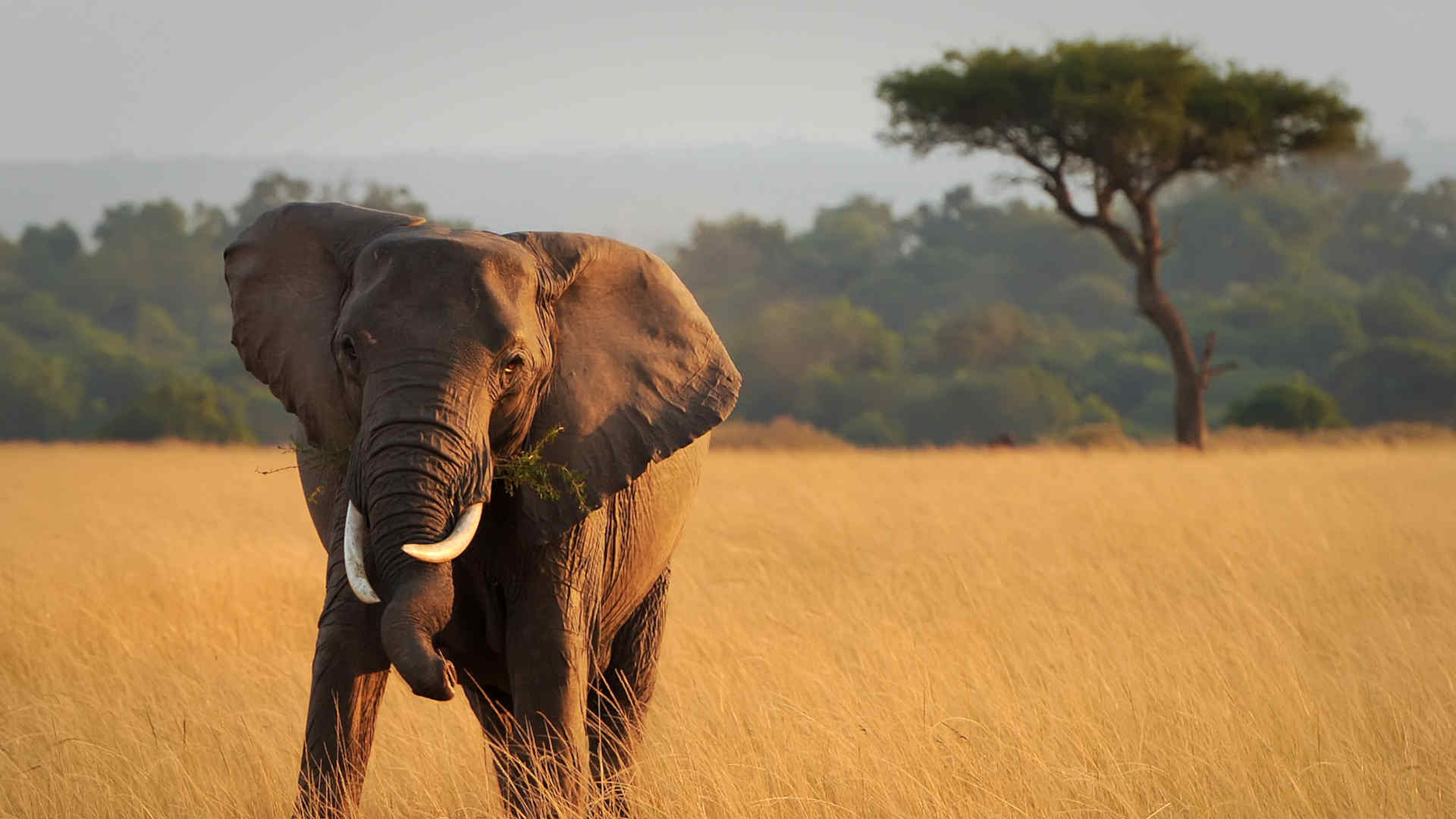 An elephant on the plains
