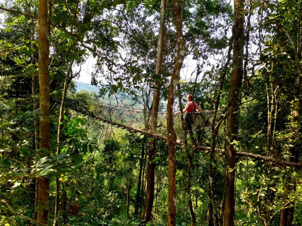 A volunteer explores the elephant sanctuary in Laos