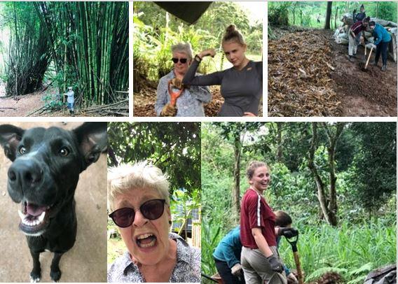 Various Galapagos volunteer efforts