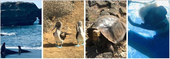 Boobies, tortoises, sea lions and snorkelling