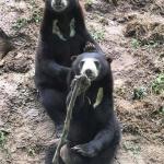 Volunteer with wildlife in Thailand