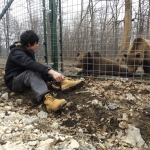 Bear volunteering