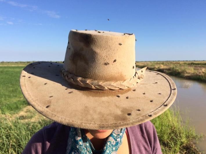 Akubra hat covered in flies