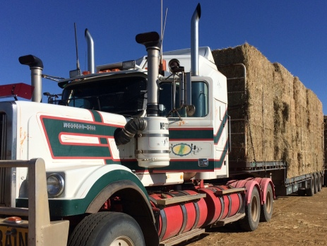 Panoramic view of a truck loaded with hay about to drive off